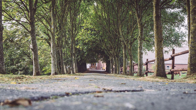 Foto von Hillrichs Hof in Niedersachsen für unseren Reiseblog über das Landleben